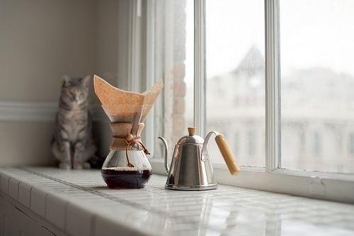 кошки кофе