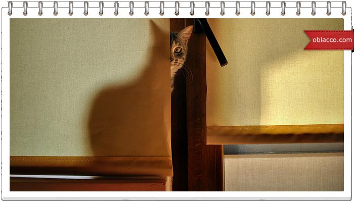 Ленивый кот звонит, чтобы ему принесли кушать