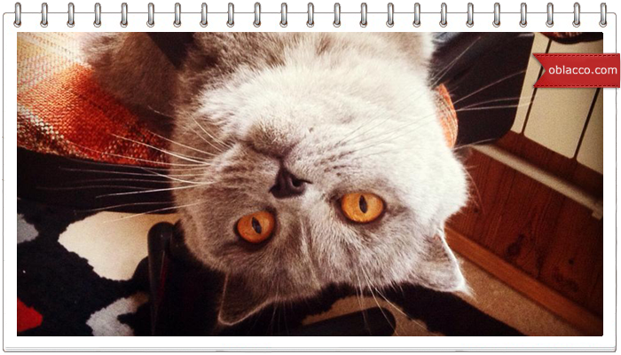 Кошка и липучка