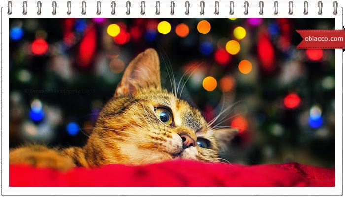 кот новый год