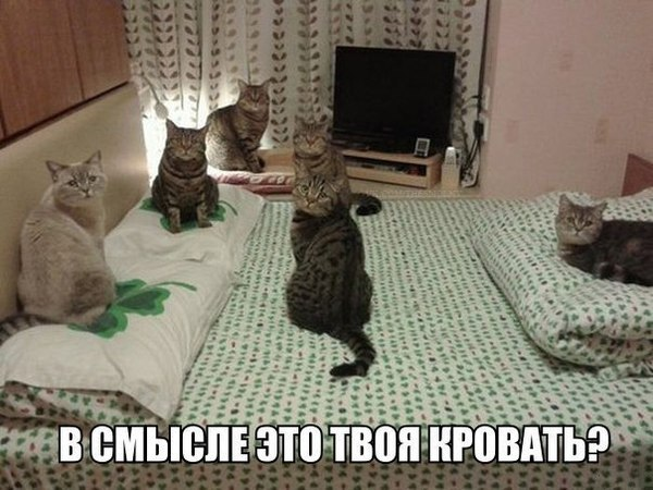 кошки кровать фото