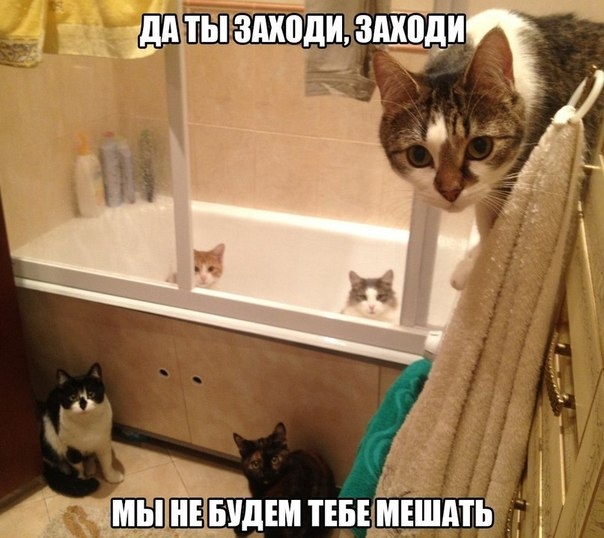 кошки ванная юмор