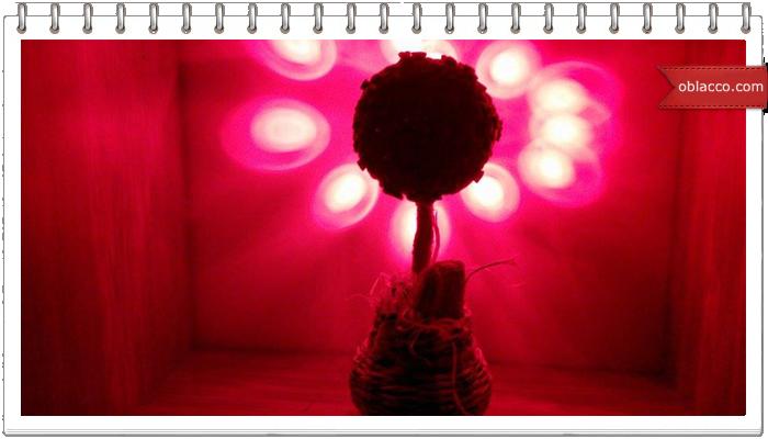Флористическое кофейное дерево своими руками. Фото мастер класс. Топиарий