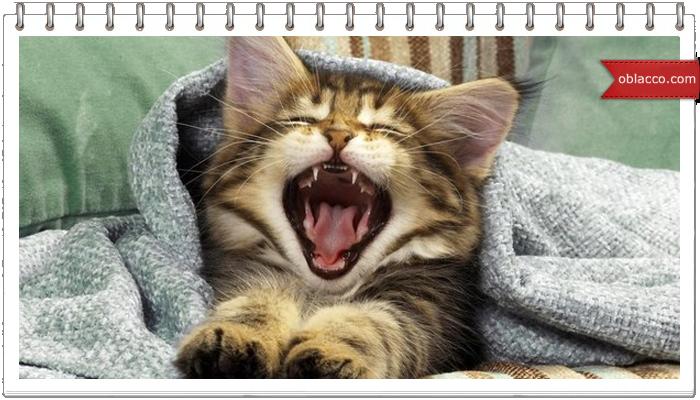 Понедельник не не слышал смешные кошки