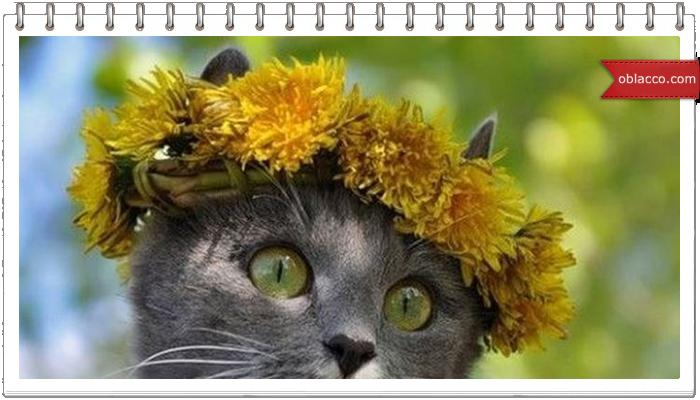 Подборка смешных кошек