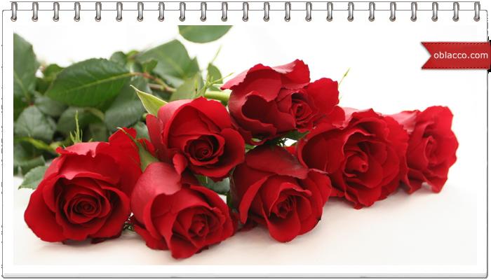 Секрет популярности и главные достоинства белорусской розы