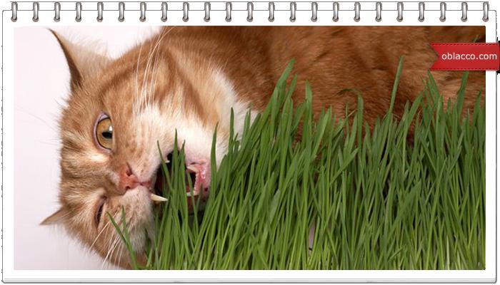 Имитация плетения из травы, виток за виток