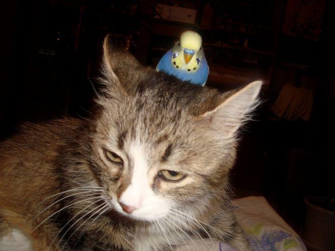 кошка попугай фото