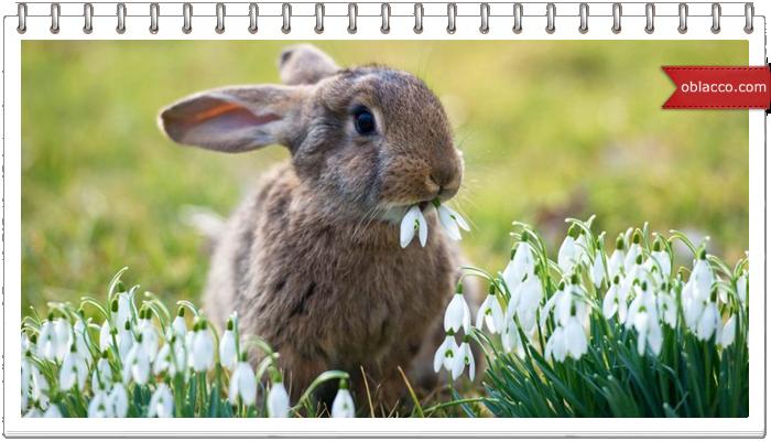 Пасхальный кролик из картона - подставка для салфеток