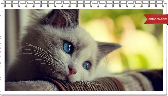 Сколько стоит котенок?