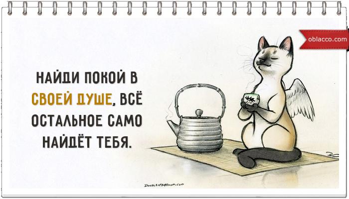 sovet dnia