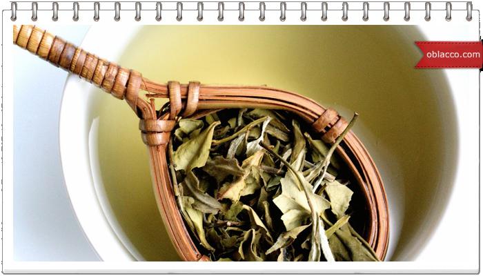 Применение зеленого чая в народной медицине