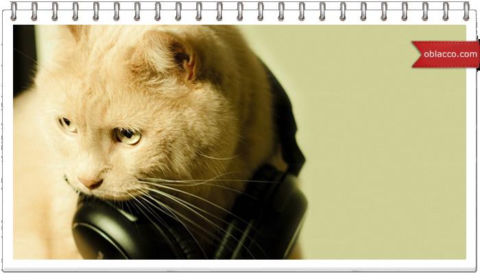 кот наушники
