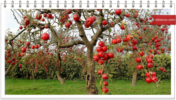 Яблочный пирог, любимый пирог Марины Цветаевой
