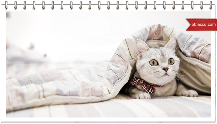 Стерилизация кошек: польза или вред