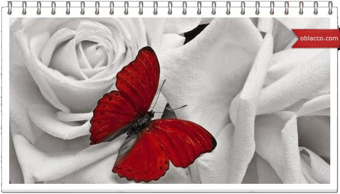 Бабочка плетеная из газетных трубочек