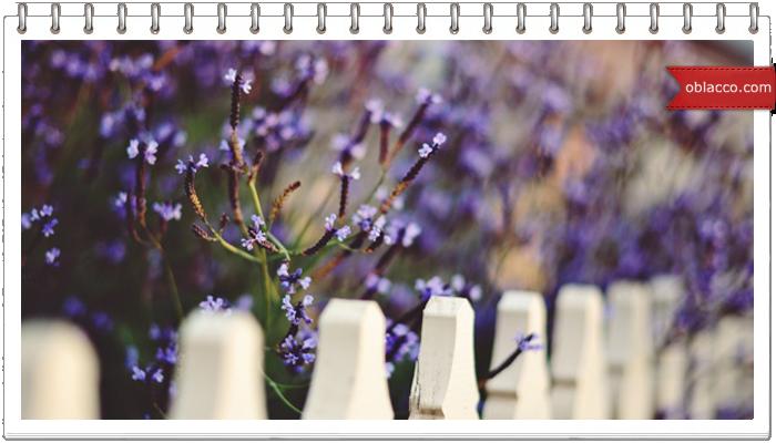 забор цветы декор ваза деревня