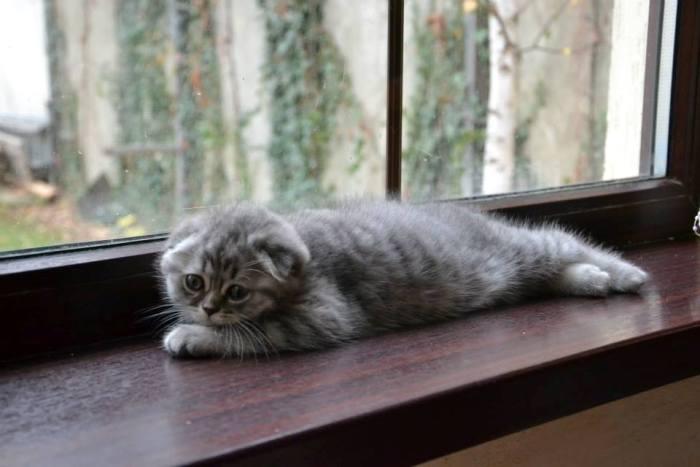 кошка окно фото
