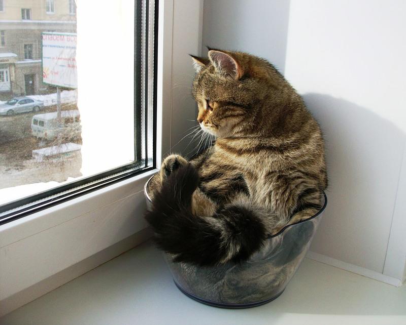 Почему коты смотрят туда где ничего нет
