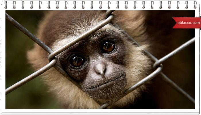 кумедна мавпочка
