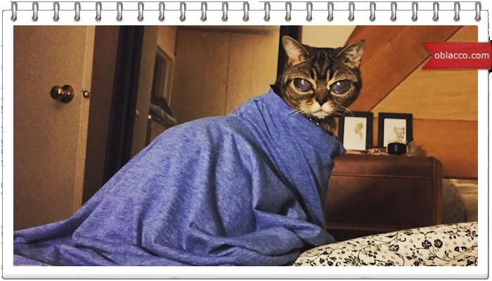 кошка матильда