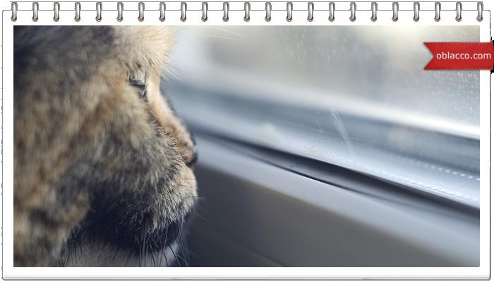 Жалюзи на окна. Как выбрать оптимальный вариант