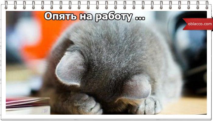 Кошек много не бывает