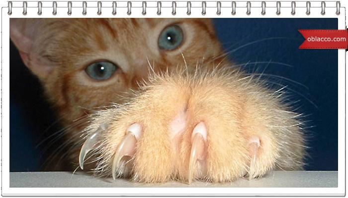 Кот учиться месить тесто