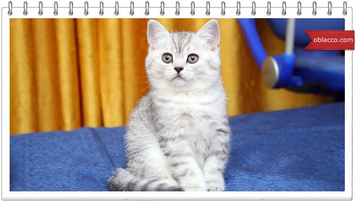 котята видео