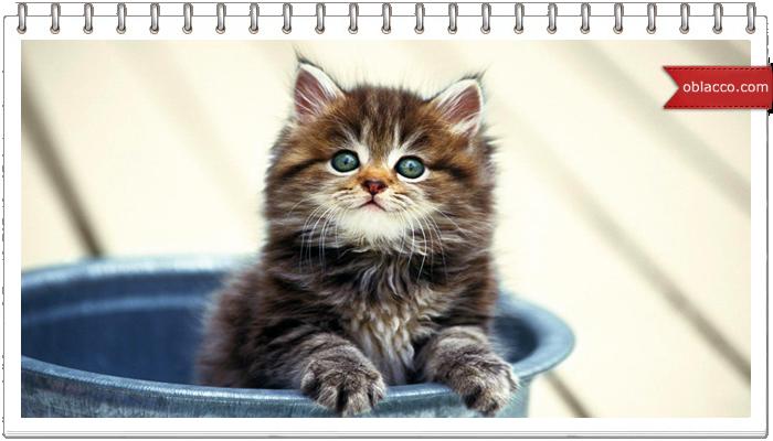 котенок и ведро