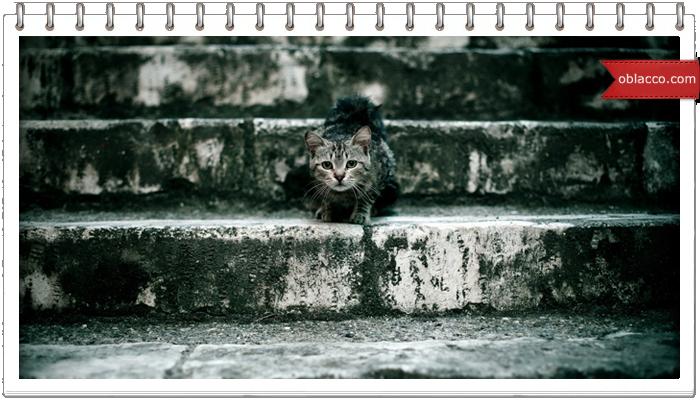 кошка лестница