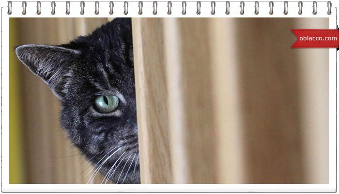 Кот- экстремал, ворует сало из кормушки для синичек