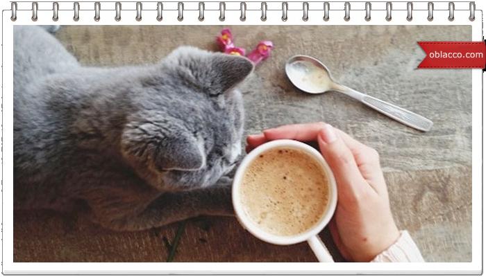 Кошка лазит по столу?