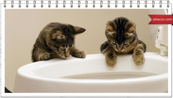 Разновидности наполнителей для кошачьего туалета