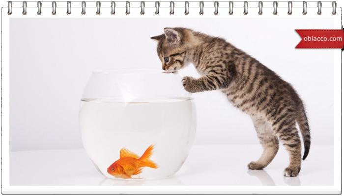 Золотая рыбка в подарок