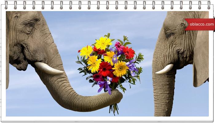 Когда дарят цветы?