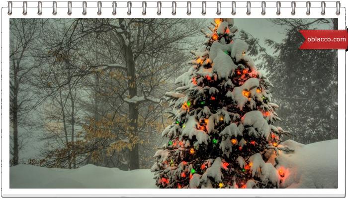 Новогодняя елочка - символ зимней сказки