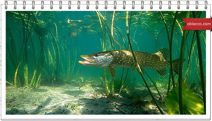 Осенняя рыбалка на щуку
