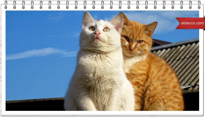 para kotov