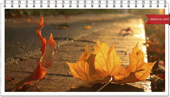 Осень тихой поступью вступает в свои права