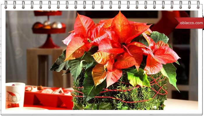 Новогодняя композиция с сухоцветами. Мастер-класс