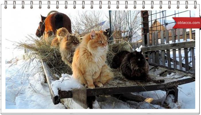 Кошки от зимней депрессии