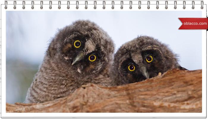 Как плести глаза и клюв для совы из газетных трубочек