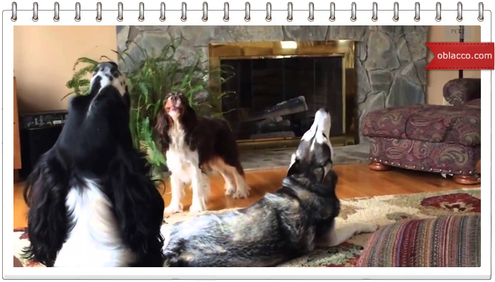 These dogs should start a music group