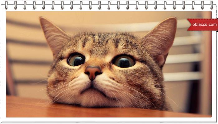 Дегустация 12 кошачьих кормов