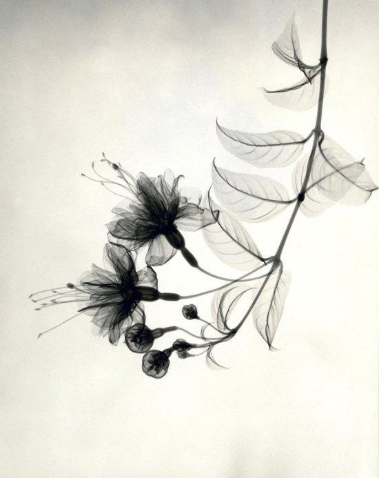 flower7