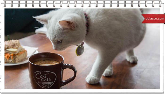 Не говорите со мной, пока я не выпью кофе!