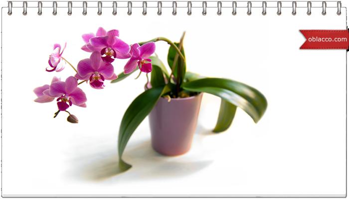 Прекрасные живые цветы