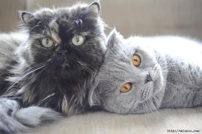кот Стейк кошка Даша