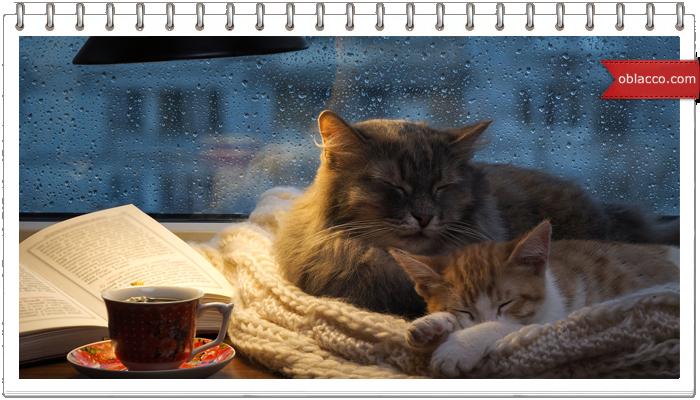 Кошки. Вечер утро